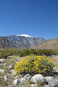 San Jacinto Mountains and Yellow Brittlebush Desert Shrub