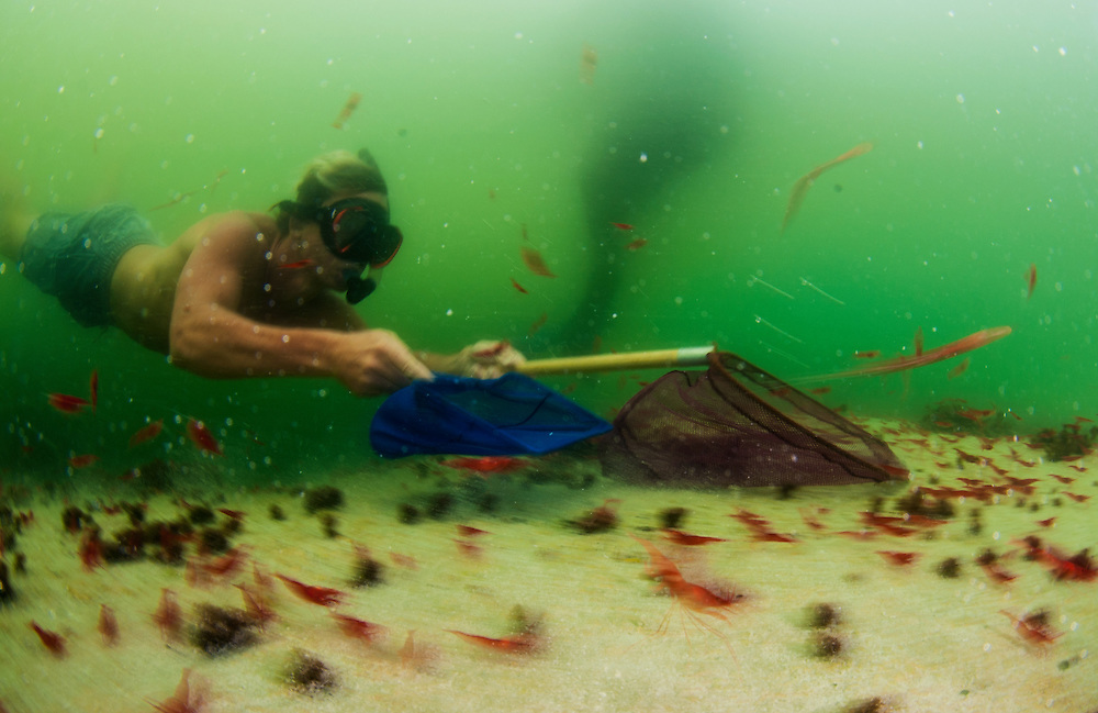 Researcher Rob Drummond uses nets to catch red cave shrimp in an unnamed pond for biological analysis.