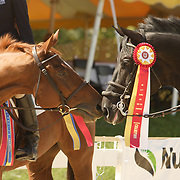 Dobbin and Windfall II at the 2007 Wellpride American Eventing Championships in Wayne, IL
