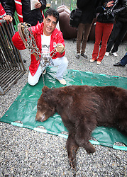 Rescued  - Masha the brown bear. <br /> Masha the bear rescued from a group of mafia who ran a bear bating tournaments. Dr Amir Khalil holding the chain that held her captive all her life, Ukraine, Monday, 2nd September 2013. Picture by Roger Allen / i-Images