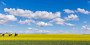 Canola crop under blue sky and cloud near Erin Vale, New South Wales, Australia.
