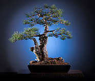 20120424 Bonsai