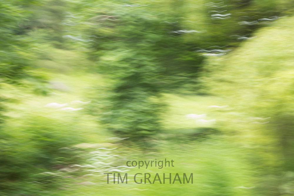 Impressions of Nature - trees, abstract,  England
