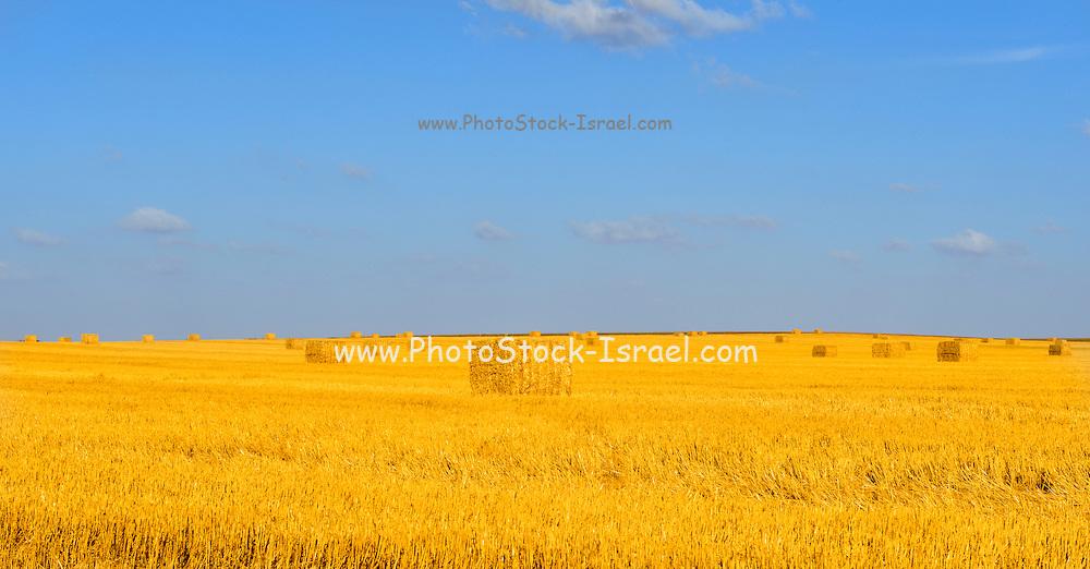 Israel, Negev, HaBesor region, landscape