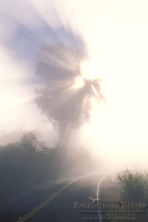 Sunbeams through fog and tree over two lane rural country mountain road, Mount Tamalpais, Marin County, California