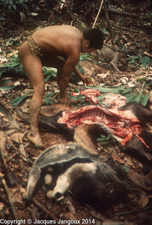 South America, Venezuela, Guiana Highlands: man cutting up anteater that he and other hunters killed.