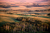 Early morning sun illuminates Cypress Hills, Saskatchewan