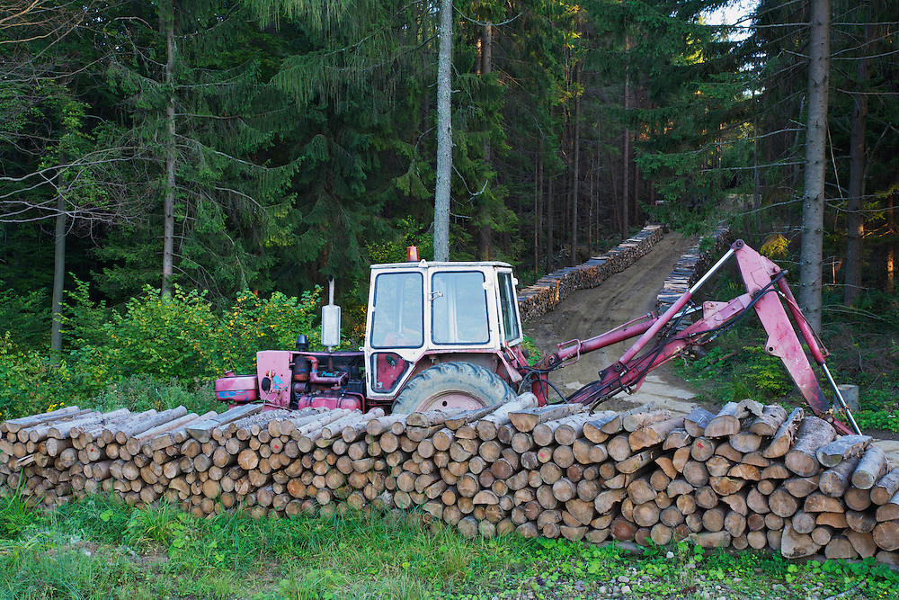 Cut logs of Scot's pine (Pinus silvestris), Birch (Betula sp.) and Common beech (Fagus sylvatica) at a state forestry woodyard at the Polish-Slovakian border, Poland.