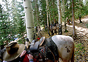 Preparing the horses at the trailhead for a hunt in the Colorado Rocky Mountains