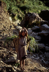 POKHARA, NEPAL - OCTOBER 1992 - A Nepalese girl carries her harvest through the foothills of the Annapurna mountain range, near Pokhara, Nepal. The ecomomy of Nepal relies on agriculture with most of its workforce growing sugarcane, rice, maize, wheat, potatoes, vegetables, and tobacco in the lowlands. (PHOTO © JOCK FISTICK)