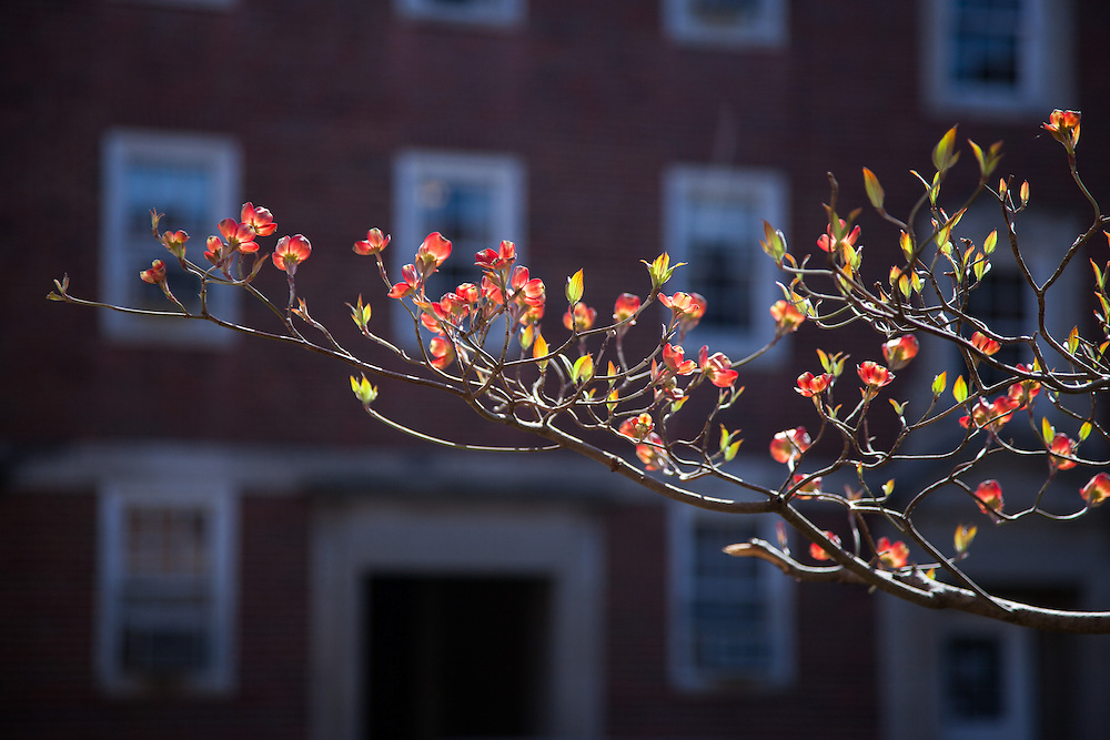Spring on Ohio University's campus is in full bloom April 16, 2014.  Photo by Ohio University / Jonathan Adams