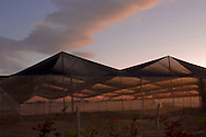 Net covered fields in Vegas Robaina, San Luis, Pinar del Rio, Cuba.