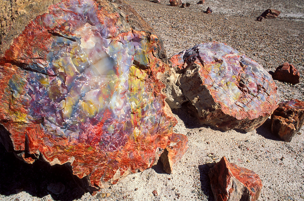 Cross section detail of a petrified log in the Crystal Forest, Petrified Forest National Park, Arizona