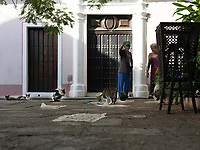Stray cats feed on food left for them in Old Havana.