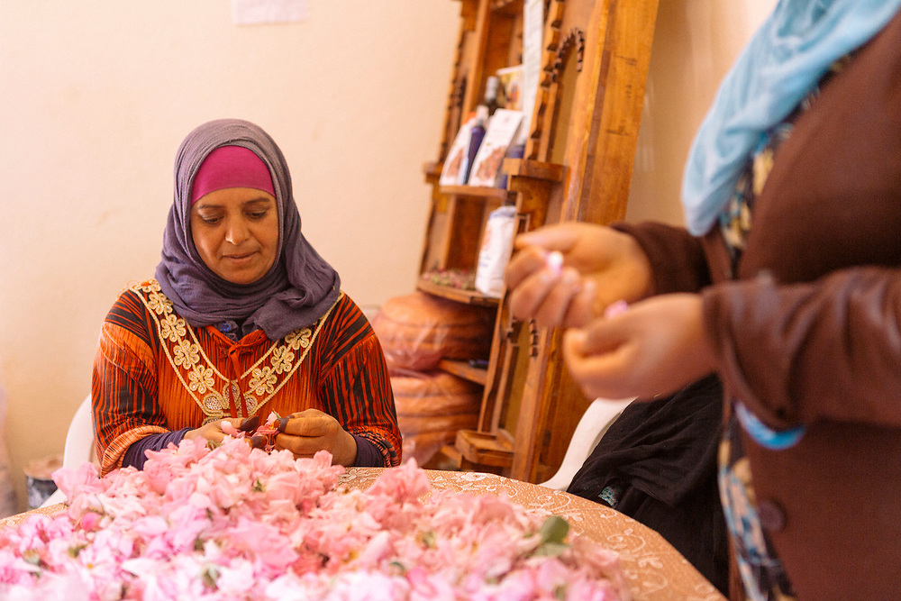 KELAAT M'GOUNA, MOROCCO - 14TH MAY 2016 - Members of the Association Feminine du Dades seperate and sort harvested roses ready for distillation to produce rose water and oil.
