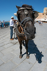 Horse, Chania, Crete, Greece