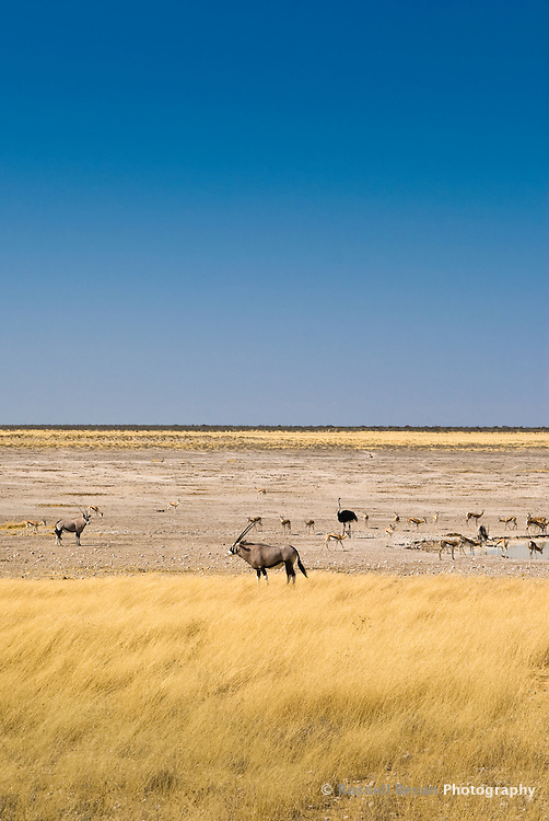 Animals at a dried up water hole in Etosha National Park, Namibia