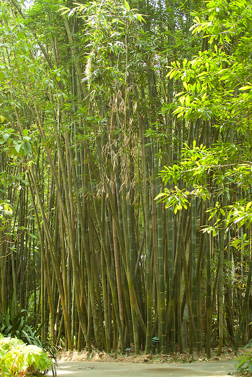 Selby Gardens Sarasota Florida