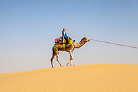 A woman riding a camel on a sand dune in the Thar desert, Rajasthan, India.