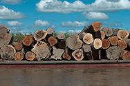 En el Per&uacute;, la Selva y el Oriente (antiguamente llamada monta&ntilde;a) son denominaciones locales de la Amazonia, la gran selva tropical de Am&eacute;rica del Sur. La porci&oacute;n de territorio que este bioma ocupa, tiene un &aacute;rea de m&aacute;s de 782,8 mil km&sup2; desde las estribaciones orientales de la cordillera de los Andes hasta los l&iacute;mites pol&iacute;ticos con Ecuador, Colombia, Brasil y Bolivia en el llano amaz&oacute;nico.<br /> <br /> La Amazon&iacute;a peruana conforma de por s&iacute; una regi&oacute;n biogeogr&aacute;fica constituida por el bioma de selva lluviosa cuya vegetaci&oacute;n representativa es el bosque denso siempreverde de hoja ancha y su clima es tropical h&uacute;medo.<br /> <br /> La Amazonia peruana es una de las &aacute;reas con mayor biodiversidad y endemismos del planeta, as&iacute; como la regi&oacute;n biogeogr&aacute;fica peruana con menor poblaci&oacute;n humana. No obstante tener la menor densidad poblacional del pa&iacute;s, es a su vez la m&aacute;s diversa antropol&oacute;gicamente. La mayor parte de etnias del pa&iacute;s se asientan en ella y son habladas all&iacute; el grueso de las lenguas aut&oacute;ctonas del Per&uacute;.<br /> <br /> &copy;Alejandro Balaguer/Fundaci&oacute;n Albatros Media.