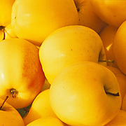Close-Up of yellow apples. Mexico