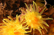 Alberto Carrera, Narural Colors Exhibition, Sea anemone, Mediterranean Sea, Spain, Europe