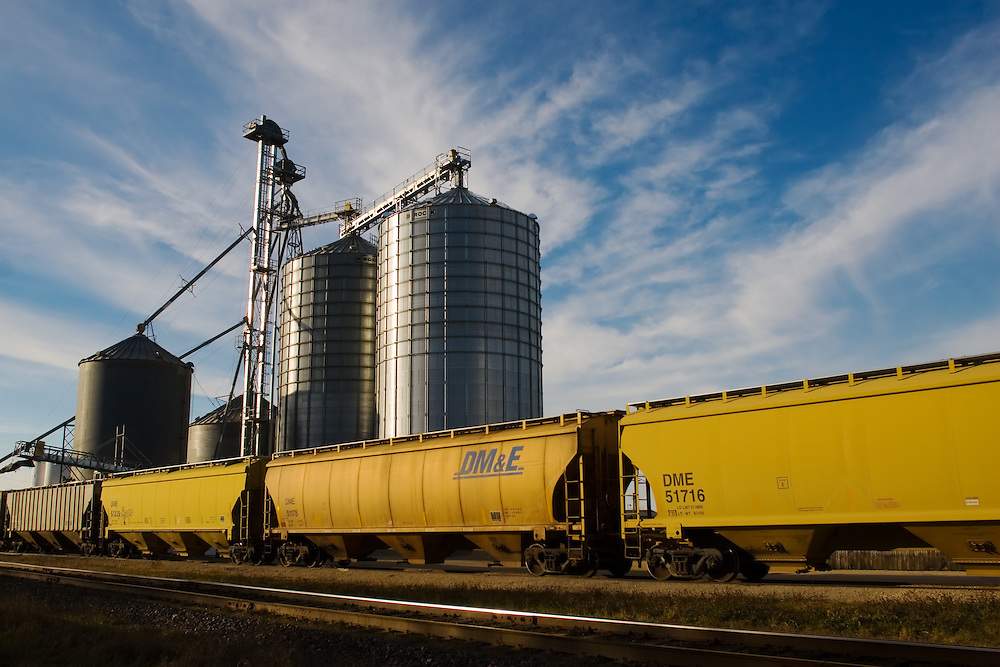 A line of yellow grain hoppers are spotted for loading at a small country grain elevator.