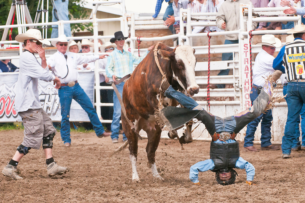 Junior steer riding, Strathmore Heritage Days, Rodeo, Strathmore, Alberta, Canada