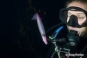marine biologist Sarah Matye observes a purpleback flying squid on a blackwater dive in the surface waters of the deep open ocean at night, Kona, Hawaii, USA ( Central Pacific Ocean ) MR 479