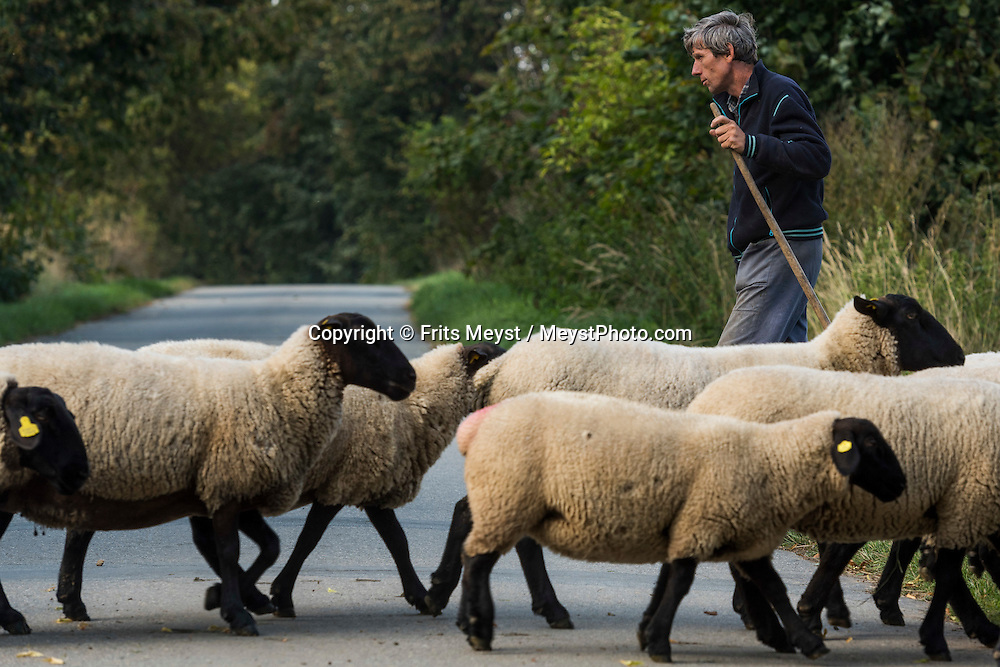 Opatov, Moravia, Czech Republic, September 2015. A shepherd guides his sheep over the road near Opatov. Southern Moravia is most famous for its wine,  rolling hills and pretty landscapes. Photo by Frits Meyst / MeystPhoto.com