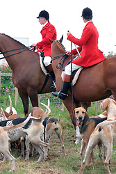 Pack of fox hunting hounds & hunters on dogs Bridport Dorset UK