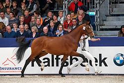 482, Kadans<br /> KWPN Stallionshow - 's Hertogenbosch 2018<br /> © Hippo Foto - Dirk Caremans<br /> 03/02/2018