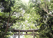 Torii gate to Meiji Shrine in ancient forest,  Tokyo Japan.