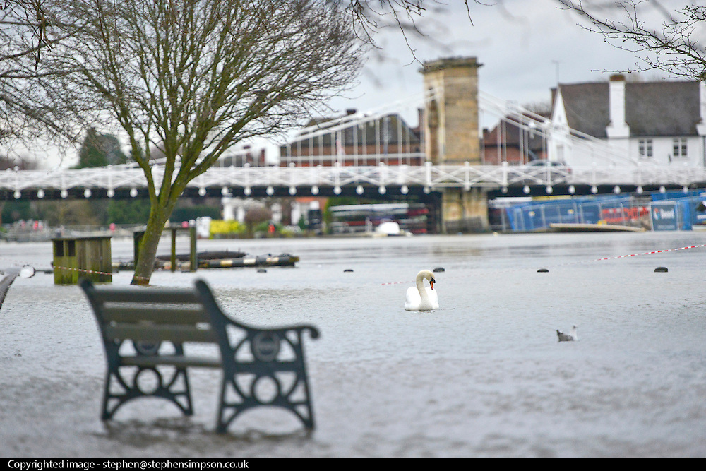 © Licensed to London News Pictures. 09/01/2014. Marlow, UK. parkland and cricket fields have flooded. Rising river levels in the River Thames at Marlow in Buckinghamshire have led to flooding and property damage along the river today 9th January 2014. Large areas of Britain are experiencing flooding after wet weather. Photo credit : Stephen Simpson/LNP