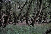 Nederland, Ooij, 24-7-2018Om het water dat via Lobith binnenkomt goed te verdelen over het Pannerdensch Kanaal en de Waal én om de waterstand te laten dalen in tijden van hoog water, zijn in de waal verschillende nevengeulen gegraven . Nijmegen heeft een grote, en een kleine die vooral een ecologische functie heeft . Dit ooibos staat daarlangs . Op dit moment is het extreem laagwater en staan ze niet in het water .FOTO: FLIP FRANSSEN