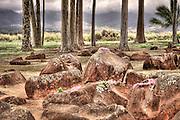 An HDR image of the Kukaniloko Hawaiian Birthing Stones on Oahu.