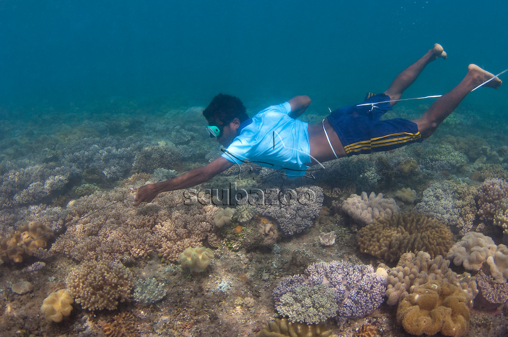 Spear fisherman searching for fish on coral reef, Near Dilli, East Timor, Southeast Asia.