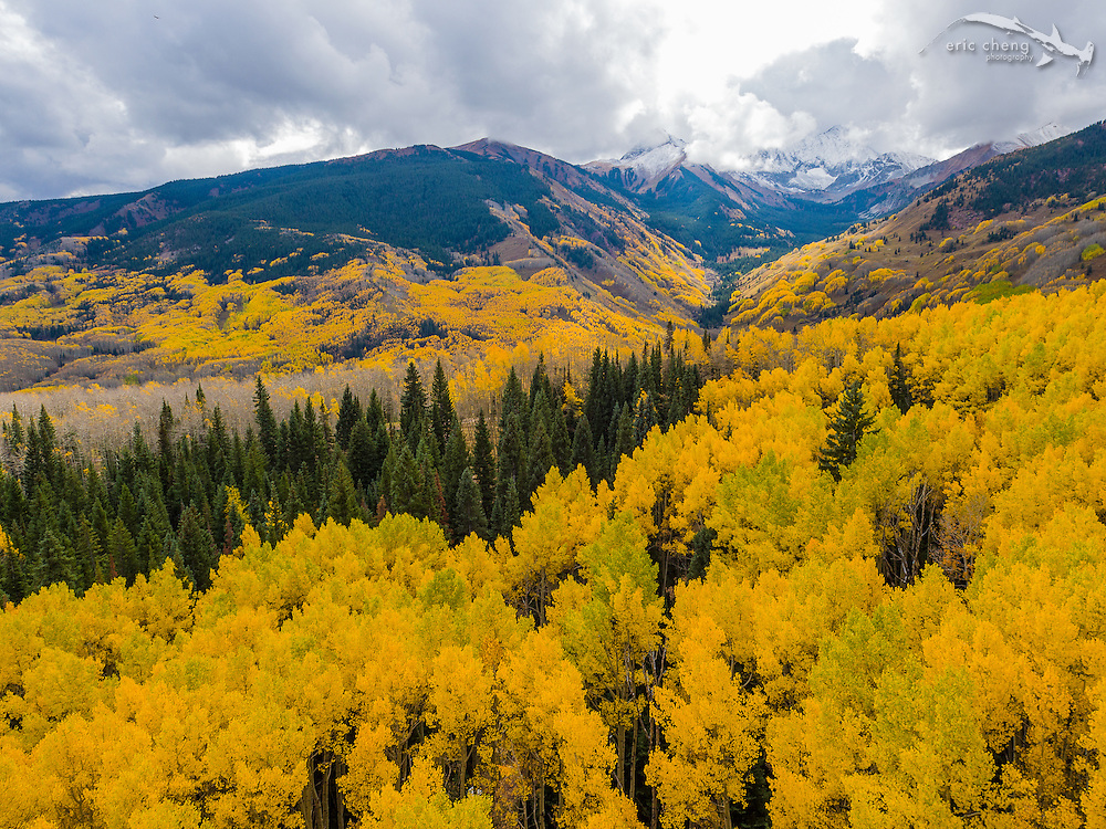 Low-altitude aerial view of fall aspen trees in Aspen, Colorado. Aerial camera drones excel at this perspective! DJI Inspire 1 Pro (preproduction) and Zenmuse X5 camera.
