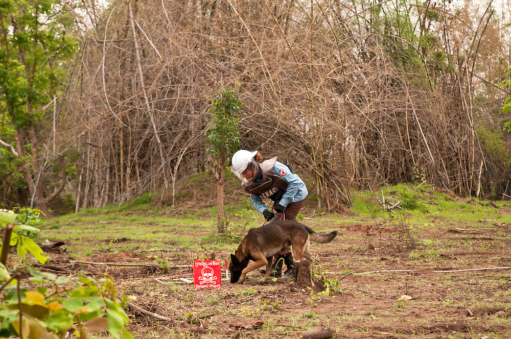 """Female deminers using dogs to detect mines.  The dogs are used in low density minefields.  Metal detectors are used in high density minefields...Kheun Sokhon, age 29, is a female deminer for Mines Advisory Group (MAG), in Palin Province, Cambodia.  She searches for land mines - facing the same threat that shattered her life at age 19 - when she stepped on a mine.  She admits, """"I don't want people to experience what I have been through."""" .."""