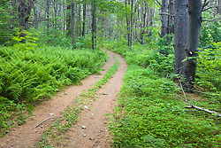 An old woods road in a forest in Turner, Maine.