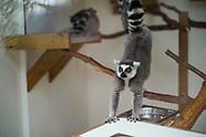 Holywell Exmoor Zoo Trip