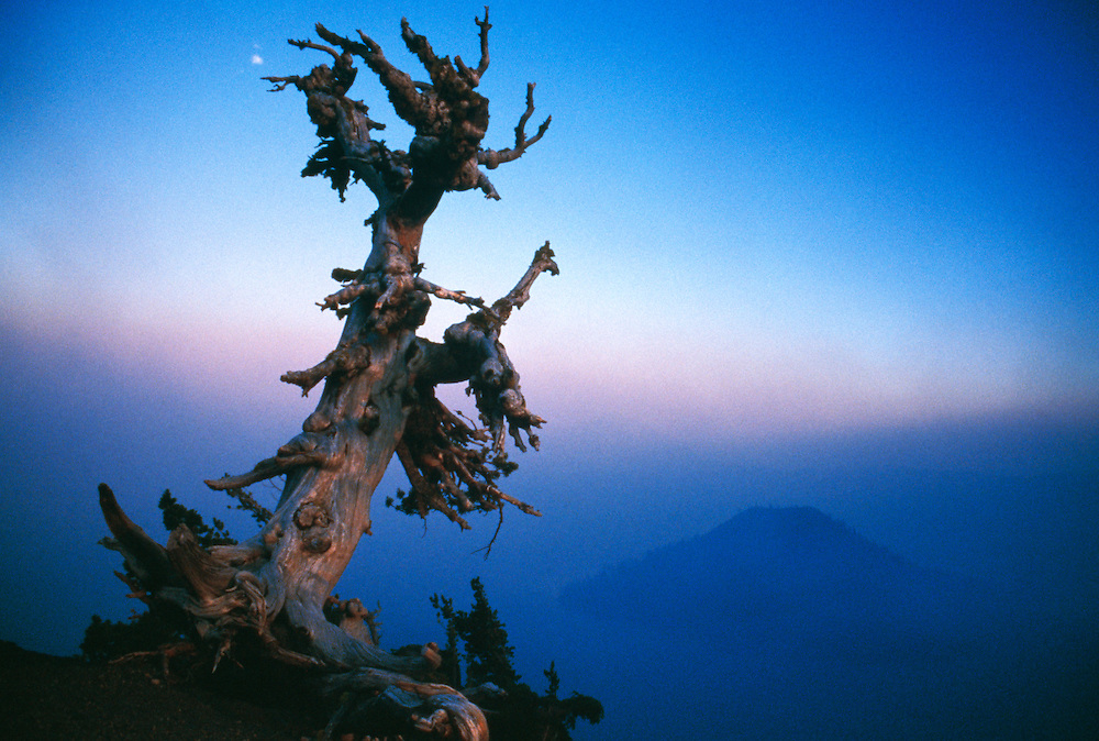 Dead tree against sky at dawn