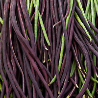 Red Noodle and green Yard Long Beans (Vigna unguiculata subso. sesquipedalis)
