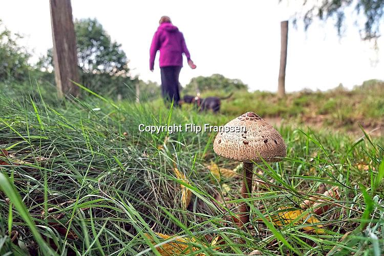 Nederland, Ubbergen, 12-9-2017De herfst doet voorzichtig zijn intredeFoto: Flip Franssen