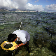 A local fishing for octopus off the coast of Honolulu, Hawaii.