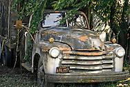 Broken Down Truck in Willow Branches