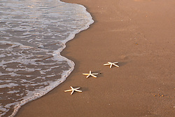 starfish on the beach by the ocean waves