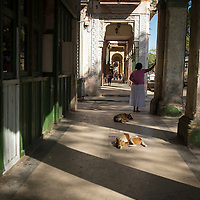 Paseo del Prado, Havana Central, Cuba, Street dogs