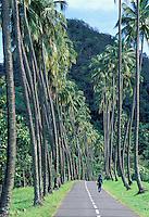 Road number D 10 - Anse Ceron - Martinique (French département d'outre Mer - DOM) - France<br /> French West Indie - Antilles françaises<br /> Caribbean