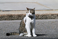 Larry the 10 Downing Street cat, Cabinet meeting, 10 Downing Street, London UK, 10 June 2014, Photo by Richard Goldschmidt